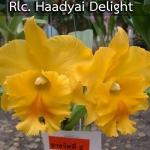 Rlc. Haadyai Delight (แคทลียา หาดใหญ่ ดีไลท์) / MD