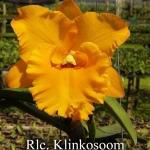 Rlc. Klinkosoom (แคทลียา กลิ่นโกสุมภ์) /MD