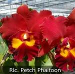 Rlc. Petch Paitoon (แคทลียา เพชรไพทูรย์) / BS