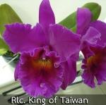 Rlc. King Of Taiwan (แคทลียา คิงส์อ๊อฟไต้หวัน ) / BS