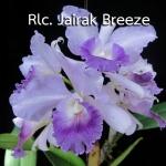 Rlc. Jairak Breeze (แคทลียา ใจรัก บรีซ) / BS